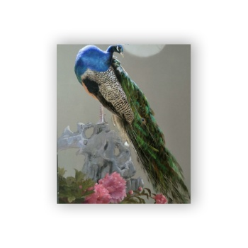 Peacock Custom Hanging Picture Decoration Picture,Canvas Print